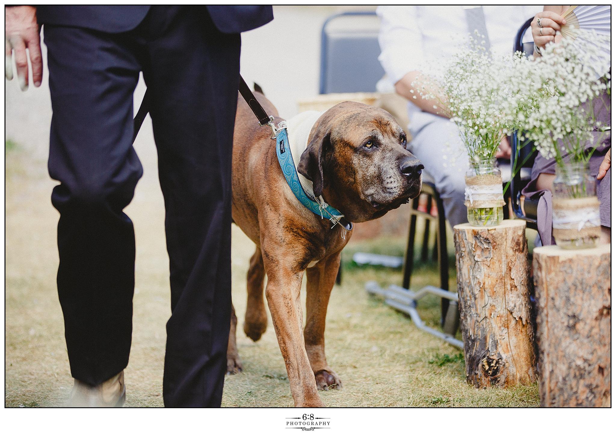 68 Photography - Tammy Mark Wedding_0123